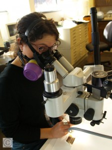 Small image showing Lisa Duncan using a binocular microscope and wearing a respirator.